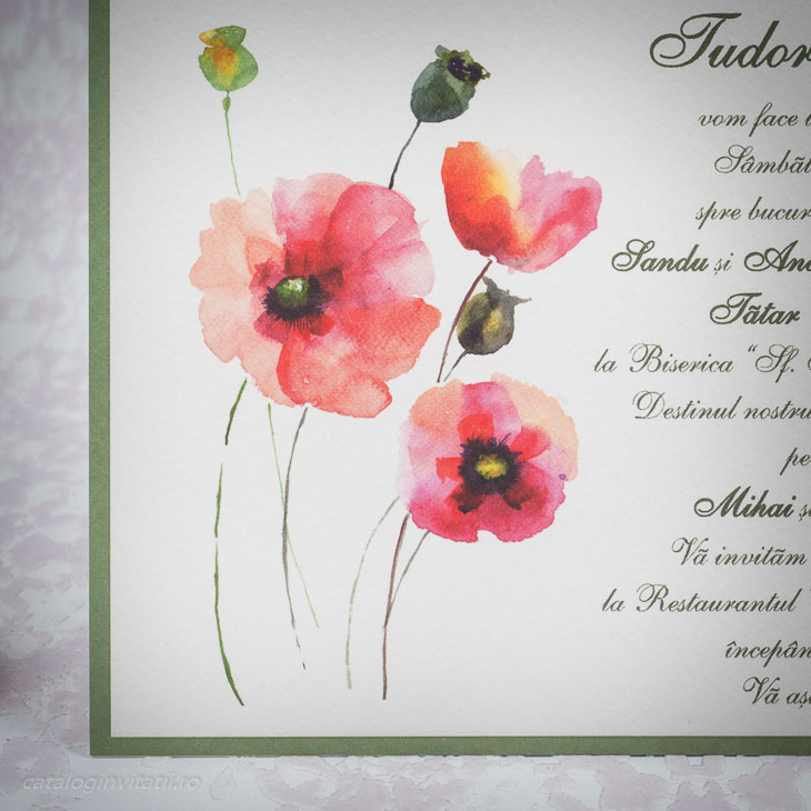 Detaliu flori de mac