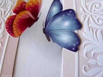 detaliu macro fluturi
